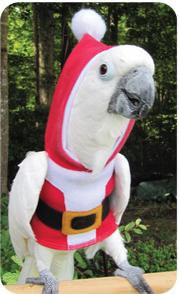 Santa-Claws-Hoodie